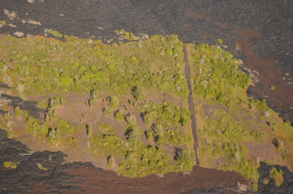 A road in an island of green in the Pu'u Loa lava fields, The Big Island, Hawaii