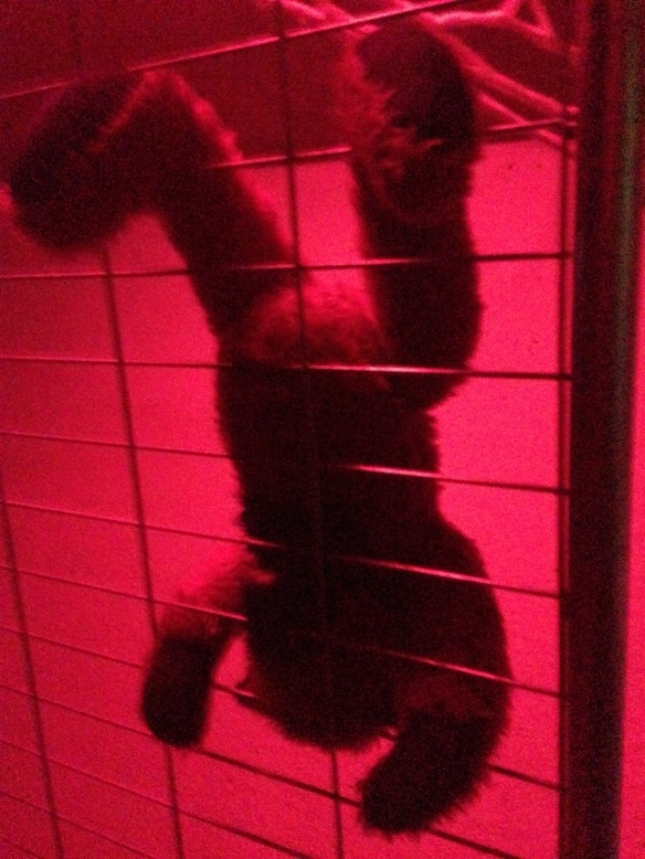 A teddy bear crawling along a metal grid with red back lights, a bit creepy or funny, I'm not sure which