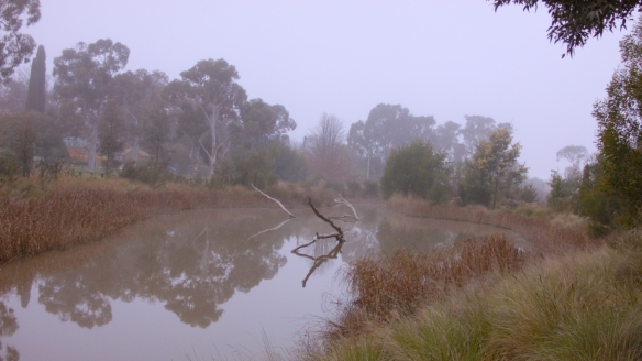 Misty wetlands with trees reflected in the water