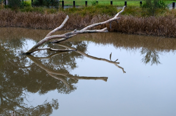 Tree submerged in wetland with reflections in still water