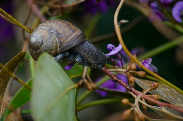 Snail on twig and flower